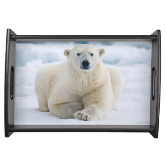 Adult polar bear on the summer pack ice serving tray