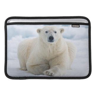 Adult polar bear on the summer pack ice sleeve for MacBook air