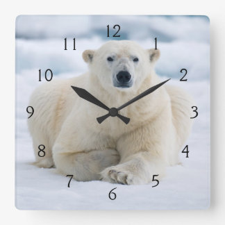 Adult polar bear on the summer pack ice square wall clock