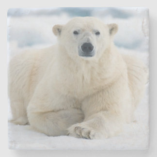 Adult polar bear on the summer pack ice stone beverage coaster