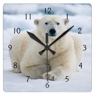 Adult polar bear on the summer pack ice wall clocks