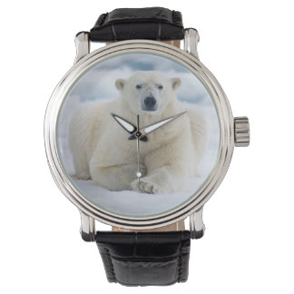 Adult polar bear on the summer pack ice wrist watch