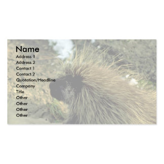 Adult Porcupine Pack Of Standard Business Cards