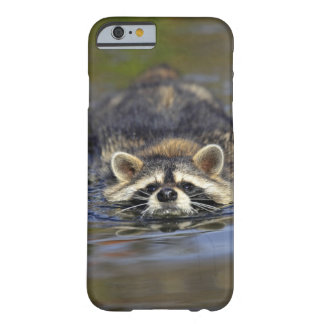 Adult Raccoon, Procyon lotorOrder : Barely There iPhone 6 Case