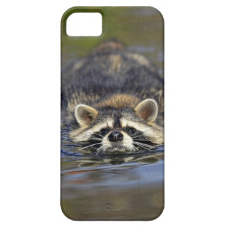 Adult Raccoon, Procyon lotorOrder : Case For The iPhone 5