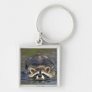 Adult Raccoon, Procyon lotorOrder : Key Ring
