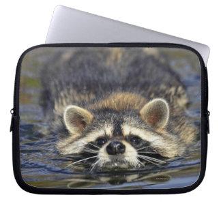 Adult Raccoon, Procyon lotorOrder : Laptop Sleeve