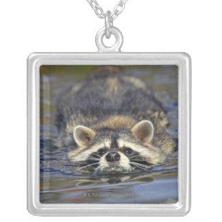 Adult Raccoon, Procyon lotorOrder : Square Pendant Necklace