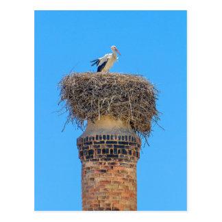 Adult stork in nest on chimney.JPG Postcard