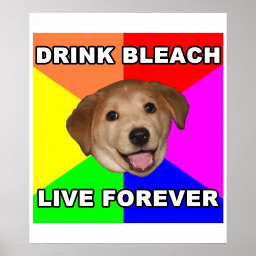 Advice Dog Print