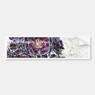 Aeonium Flower On Dry Rocks Bumper Sticker