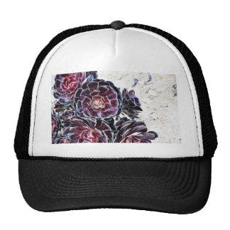 Aeonium Flower On Dry Rocks Trucker Hat