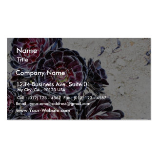 Aeonium Flower On Dry Rocks Pack Of Standard Business Cards