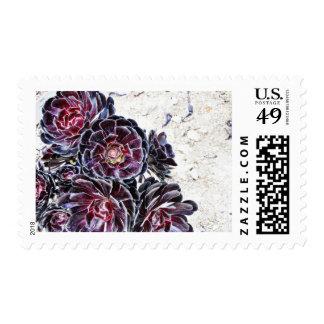 Aeonium Flower On Dry Rocks Postage Stamp