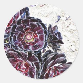Aeonium Flower On Dry Rocks Round Sticker