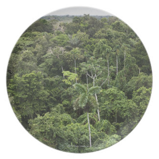 Aerial view of Amazon Rain forest Plate