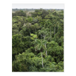 Aerial view of Amazon Rain forest Postcard