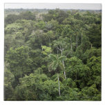 Aerial view of Amazon Rain forest Tile