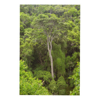 Aerial View Of Indigenous Forest, Knysna-Amatole Wood Print
