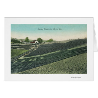 Aerial View of Prunes Drying in the Sun Card