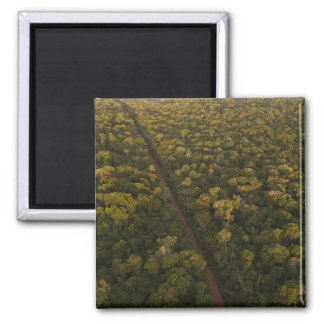 Aerial View of rainforest. Iwokrama Reserve, 2 Square Magnet