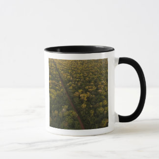 Aerial View of rainforest. Iwokrama Reserve, 2 Mug