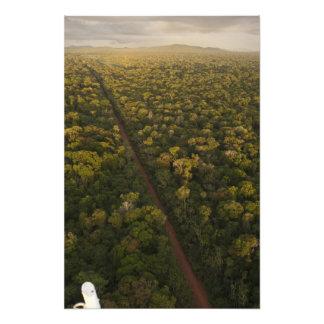 Aerial View of rainforest. Iwokrama Reserve, 2 Photo Print