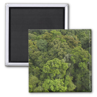 Aerial View of rainforest. Iwokrama Reserve, Square Magnet