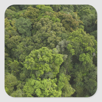 Aerial View of rainforest. Iwokrama Reserve, Square Sticker