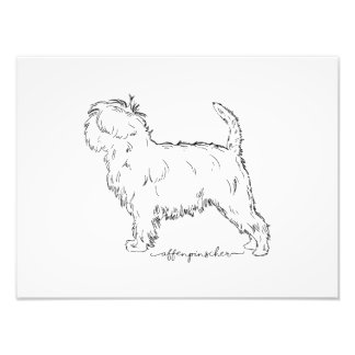 Affenpinscher sketch photo