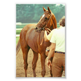 Affirmed Thoroughbred Racehorse 1978 Photographic Print
