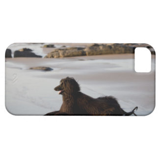 Afghan dog in the beach of Deba, Guipuzcoa, Barely There iPhone 5 Case