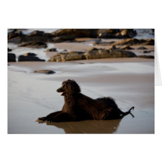 Afghan dog in the beach of Deba, Guipuzcoa, Card