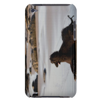 Afghan dog in the beach of Deba, Guipuzcoa, iPod Touch Cover