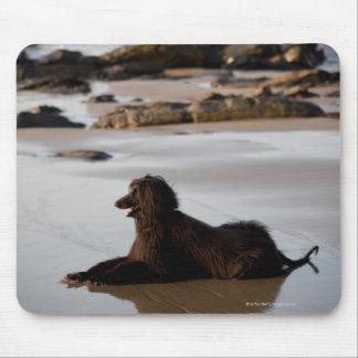 Afghan dog in the beach of Deba, Guipuzcoa, Mouse Pad