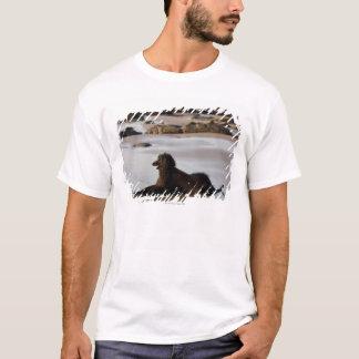Afghan dog in the beach of Deba, Guipuzcoa, T-Shirt