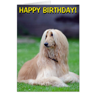 Afghan Hound customizable greetings card
