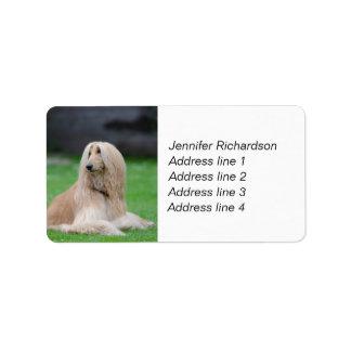 Afghan Hound dog personalize custom address labels