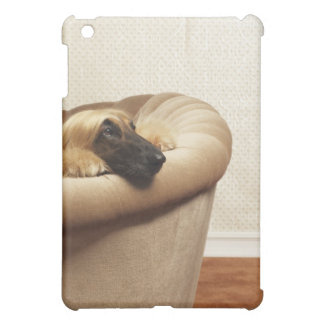 Afghan hound lying on sofa cover for the iPad mini
