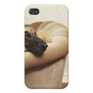 Afghan hound lying on sofa iPhone 4/4S cases