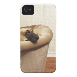 Afghan hound lying on sofa iPhone 4 case