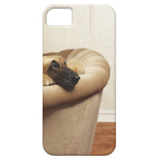 Afghan hound lying on sofa iPhone 5 cover