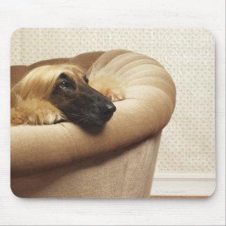 Afghan hound lying on sofa mouse mat