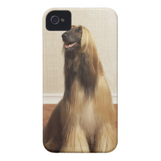 Afghan hound sitting in room 2 iPhone 4 case