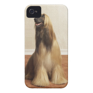 Afghan hound sitting in room 2 iPhone 4 Case-Mate cases