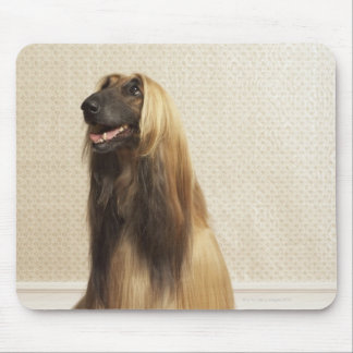 Afghan hound sitting in room 2 mouse pad
