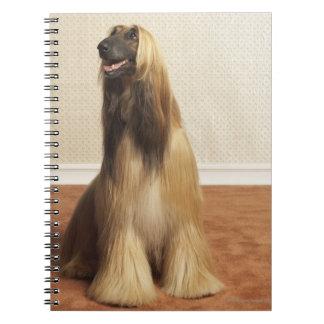 Afghan hound sitting in room 2 notebook