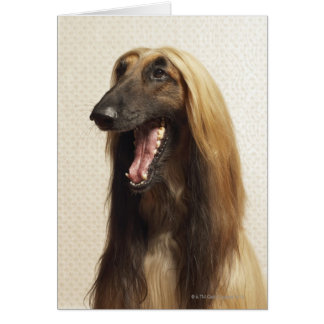 Afghan hound sitting in room card