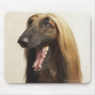 Afghan hound sitting in room mouse mat