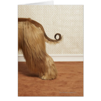 Afghan hound standing in room, end section card